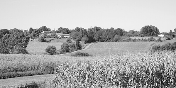paysage de chalosse
